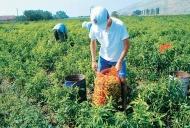 Ενημερωτική εκδήλωση για τα Σχέδια Βελτίωσης του Προγράμματος Αγροτικής Ανάπτυξης 2014-2020